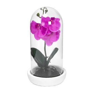 زهرة اوركيد مع غطاء زجاجي